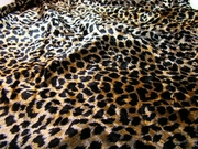 VIEW ALL Animal Prints