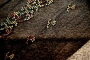 "8"" Embroidered Brown Green Olive on Black Tulle Trim #279"
