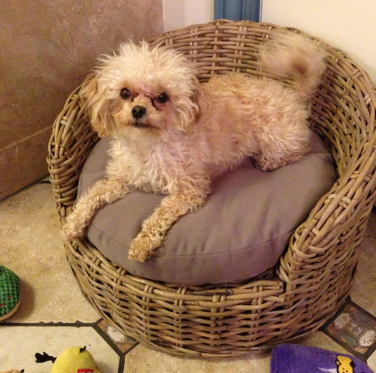 Wicker Dog Bed - Small