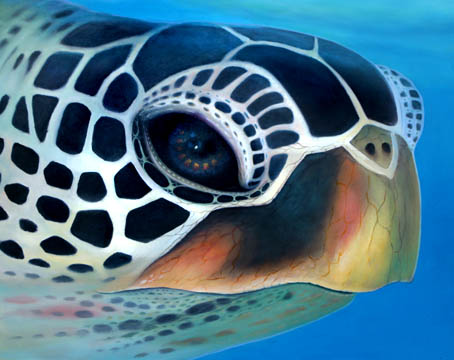 Portrait of Honu Original 24x30