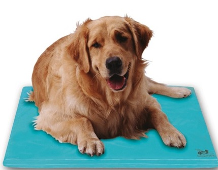 Chillow Dog Chillow Canine Cooler Dog Bed - Large at Sears.com