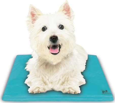 Chillow Dog Chillow Canine Cooler Dog Bed - Small at Sears.com