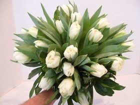 Hand Tied Tulips
