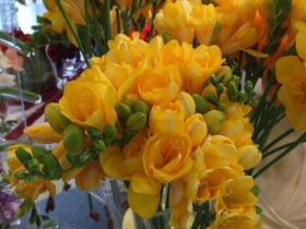 Toronto Freesia Arrangements
