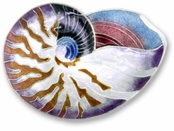Nautilus Shell Sterling Silver Enameled Pin