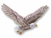 Bald Eagle Sterling Silver Enameled Pin