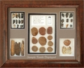 Fossil Display Case