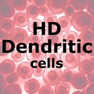 ImmunoPure™ HD Dendritic Cells
