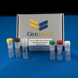 Recombinant Dicer Enzyme Kits