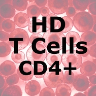 ImmunoPure™ HD T Cells CD4+