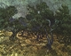 Art - Oil Paintings - Masterpiece #4213 - Vincent Van Gogh - The Olive Grove - Gallery Quality