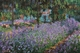Art - Oil Paintings - Masterpiece #4381 - Claude Monet - Artist s Garden at Giverny - Gallery Quality