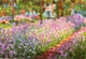 Art - Oil Paintings - Masterpiece #4385 - Claude Monet - Artist s Garden at Giverny - Museum Quality