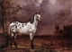 Art - Oil Paintings - Masterpiece #3043 - POTTER, Paulus - The Spotted Horse af - Gallery Quality