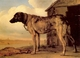 Art - Oil Paintings - Masterpiece #3050 - POTTER, Paulus - Watchdog - Gallery Quality