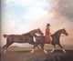 Art - Oil Paintings - Masterpiece #3064 - STUBBS, George - William Anderson with Two Saddle Horses (mk25) - Gallery Quality