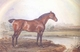 Art - Oil Paintings - Masterpiece #3066 - James Ward - Nonpareil (mk25) - Gallery Quality