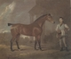 Art - Oil Paintings - Masterpiece #3092 - David Dalby - The Racehorse 'Woodpecker' in a stall - Gallery Quality