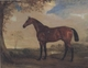 Art - Oil Paintings - Masterpiece #3099 - John Ferneley - Portrait of a Hunter Mare,The Property of Robert shafto of whitworth park,durham - Gallery Quality