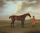 Art - Oil Paintings - Masterpiece #3125 - Francis Sartorius - The Racehorse 'Basilimo' Held by a Groom on a Racecourse - Museum Quality