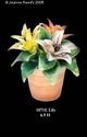 Jeanne Reed's - Lily