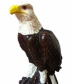 Eagle money box. 6 Pzs