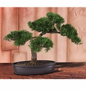 Cedar Artificial Bonsai Tree 16 in