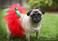 <center>NEW Doggie TuTu's!!!!</center>