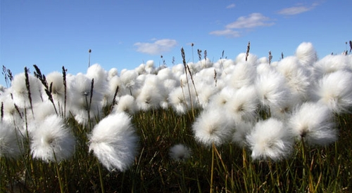About Organic Cotton