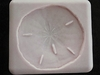 Large Sand Dollar (NM-151) by Sunflower Sugar Art