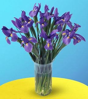 Blooming Irises Bouquet
