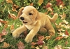Folkmanis Puppet <br>Yellow Lab Puppy