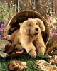 Folkmanis Puppet <br>Golden Retriever <br>Puppy