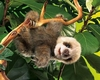 Folkmanis Puppet <br>Baby Sloth