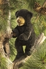 Folkmanis Puppet <br>Black Bear Cub