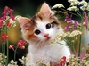Ravensburger <br>300 Piece <br>Flowery Kittens