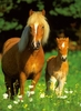 Ravensburger <br>300 Piece Puzzle <br>Happy Horses