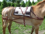 Pack Saddles for Sale