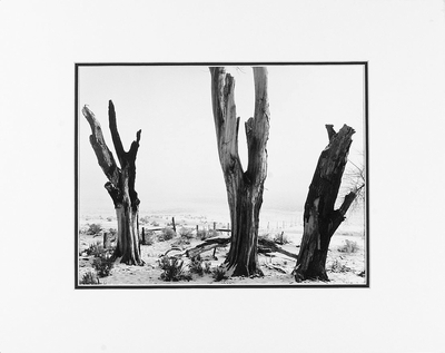 DEAD TREES, WINTER