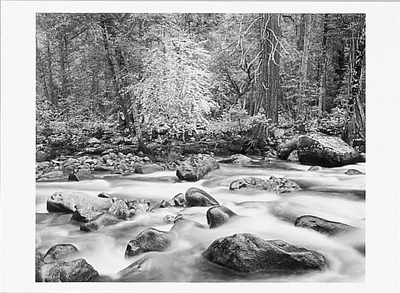 MERCED RIVER AND FOREST, YOSEMITE VALLEY, CA, 1983