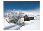 SHEEPHERDERS CABIN, LITTLE ROUND VALLEY, EASTERN SIERRA, CA - HOLIDAY CARDS