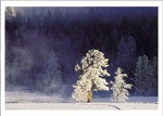 WINTER MORNING, YELLOWSTONE NATIONAL PARK, WY - HOLIDAY CARDS