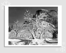 HALF DOME, APPLE ORCHARD - HOLIDAY CARDS