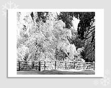 FENCE, TREES, SNOW - HOLIDAY CARDS