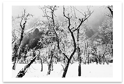 MEADOW, TREES AND SNOW, WINTER AFTERNOON, YOSEMITE NATIONAL PARK, CA c 1965
