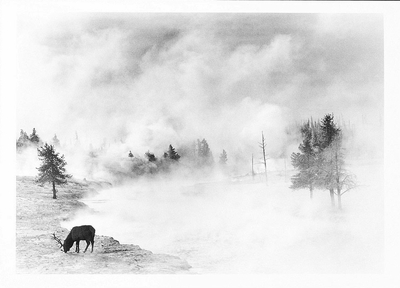 ELK, FIREHOLE RIVER, YELLOWSTONE NATIONAL PARK