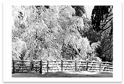 FENCE, TREES, SNOW, YOSEMITE NATIONAL PARK, CA, c 1936