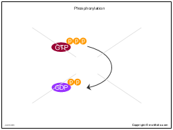 Phosphorylation