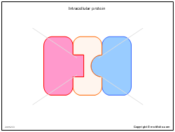Intracellular protein