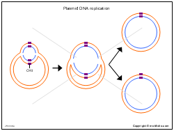 Plasmid DNA replication